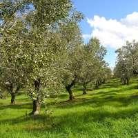 Agriturismo Fattoria La Prugnola