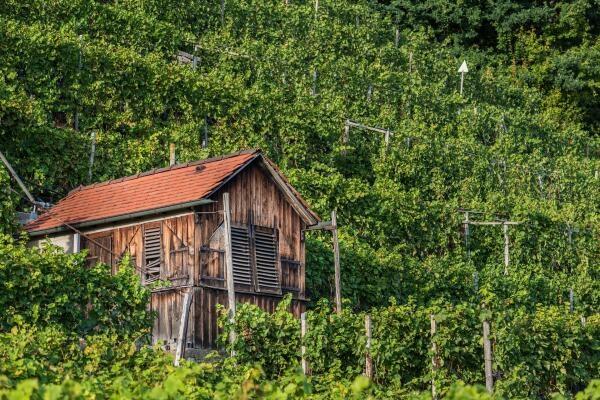 Bauernhofurlaub im Kraichgau