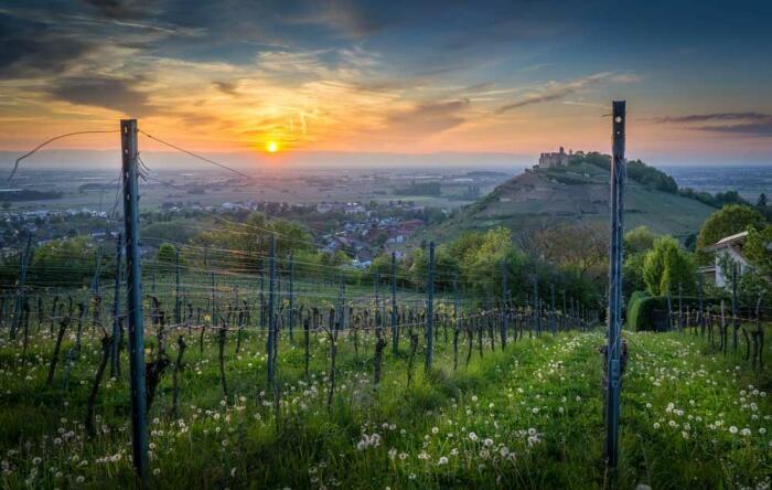 Bauernhofurlaub im Breisgau