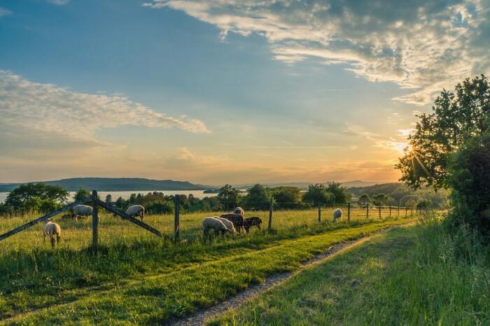 Landschaftsdetails am Bodensee
